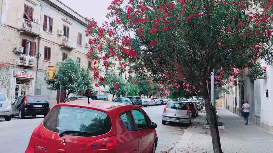 シチリア市街地に咲くオレアンドロの花
