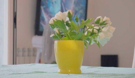 食卓に置かれた黄色い花瓶と白い花