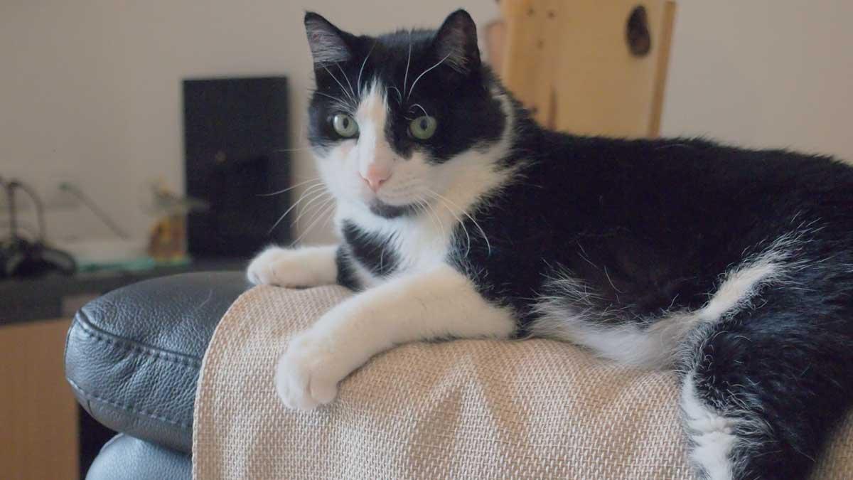親戚の家で飼ってる白黒の猫